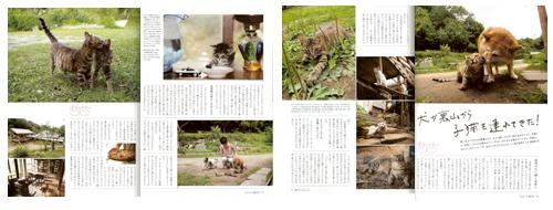 20130901_nekobiyori_71_02