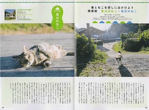 20160311_cat_photo_02